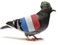 France has only one military pigeon left