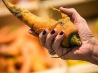 Ugly carrot - Photo: Intermarche