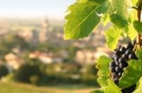 France back at top of world wine list