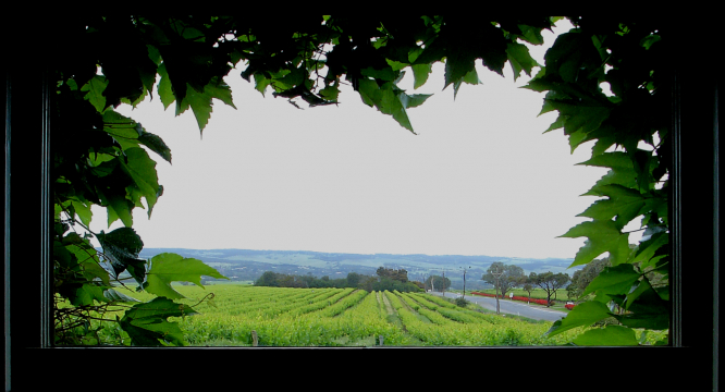 Australian vines seen through vine-framed window. Photo: Michael Delahaye