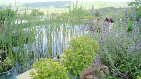Carmel MacIntyre garden
