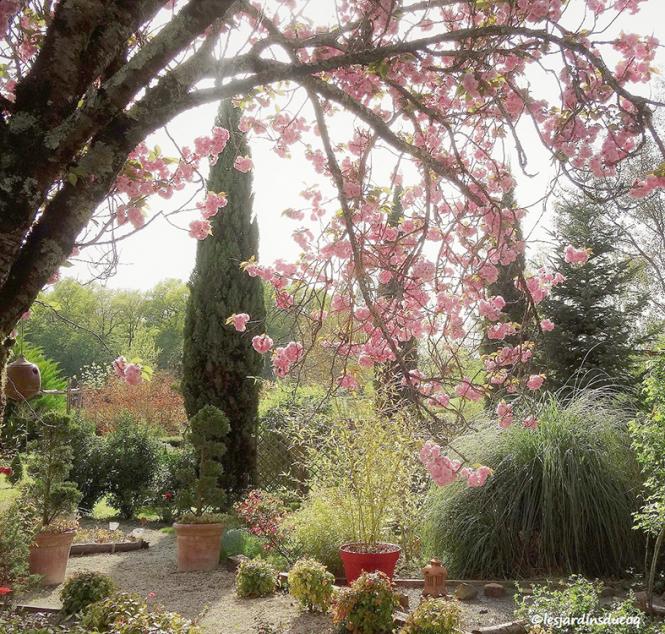 Gerald Chambord's garden Les Jardins du Coq, Montignac-le-Coq, Charente