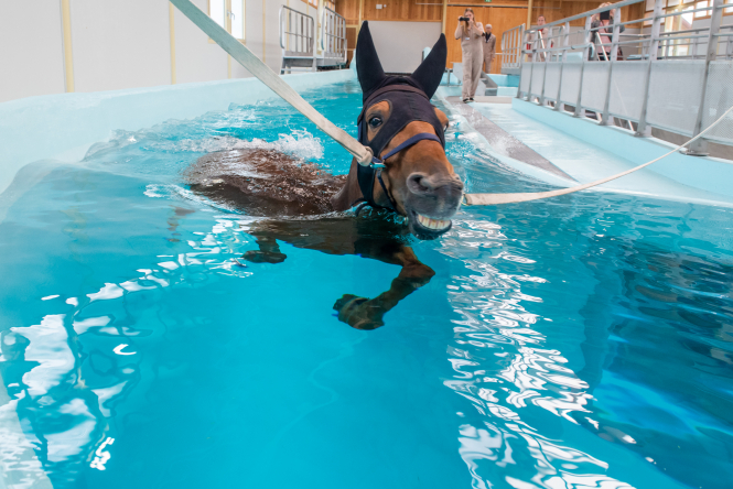 Horse swimming in therapy pool