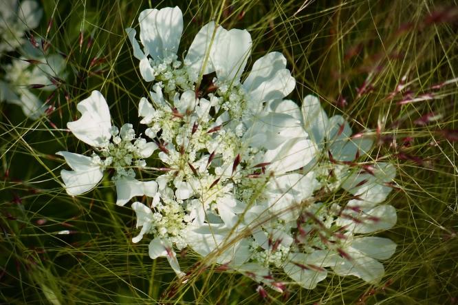 June Williamson's Le Jardin de June in full bloom.