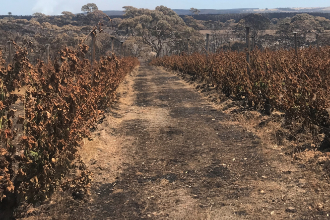 A charred vineyard, due to the Australian bushfires of 2019/2020. Connexion print edition.