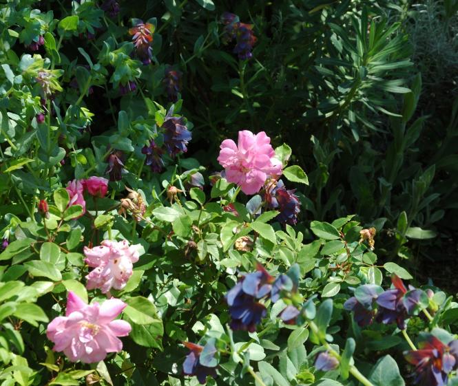 Le Jardin des Rossignols