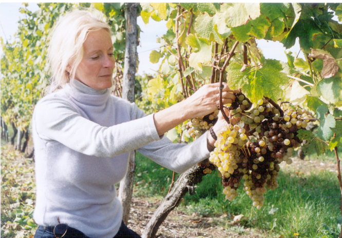 Patricia Atkinson early days in the vines