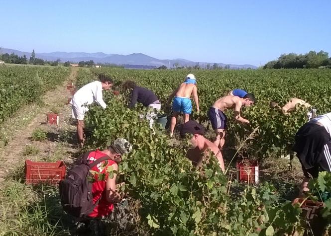 Pickers in the vineyard