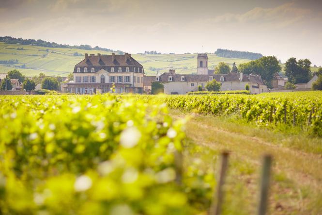 Pommard Castle vineyard in Burgundy