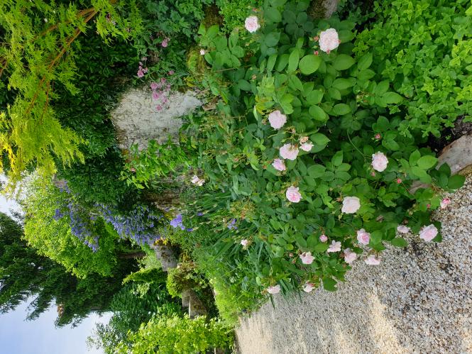 Rosemary Raine's garden