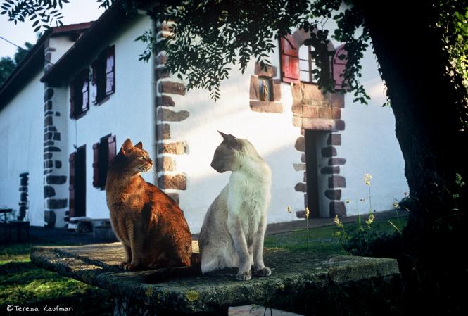 Brown cat and white cat sit like fayence cats at Itxassou gite
