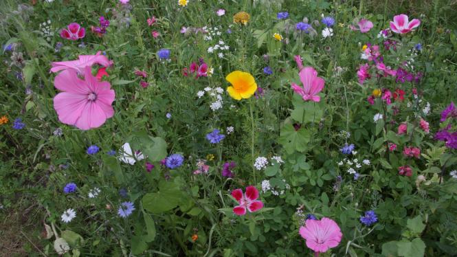 Wild flower zone Jardin des Plantes Magiques