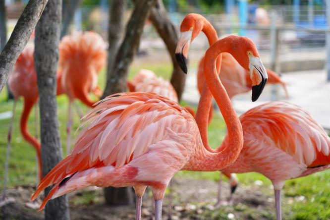 Flamingos. Photo by Zuoqi Liu / Unsplash