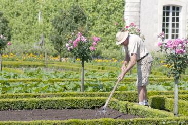 Jardinier à Villandry
