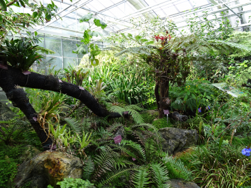 The CBN's tropical greenhouse contains 2,500 species
