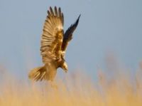 Biodiversity barometer is vital - Photo:schaef - Fotolia.com
