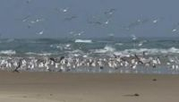 The unnamed island off coast of France that is a paradise for migrating birds - The Connexion
