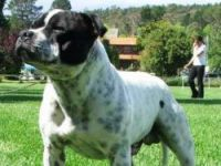 Which dog breeds are 'dangerous'?