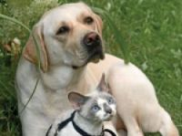 Pets play an important role in many of our lives