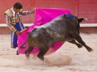 France holds Spanish-style bullfights in certain southern towns like, here, Arles