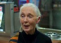 Primate expert Jane Goodall