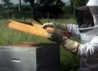 Beehives stolen from the Loire in March have been found in Finistère