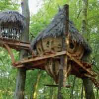 Make your holiday home in a tree...