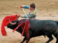 France is on its way towards replacing Spain as the home of bull-fighting