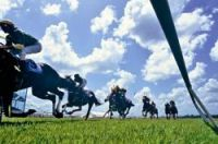 Lottery and horse racing profits up