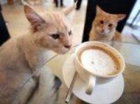 Cat cafe plan for Paris - lecafedeschats.fr