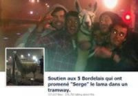 Serge the Llama becomes subject of parodies after he was kidnapped from a Bordeaux circus and taken