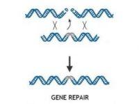 Technology can repair genes