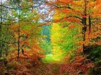 Autumn colours in the Loire are glorious - Photo: lain G très occupé-Flickr