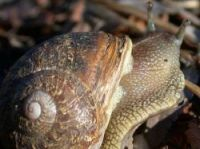 Escargoter - to snail - was judged one of the best words