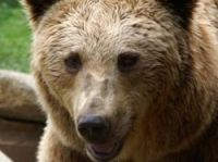 The bears arouse strong opinions both for and against