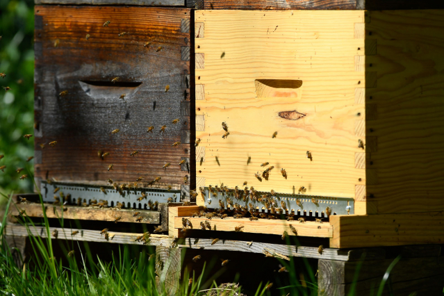 Beekeeping in France