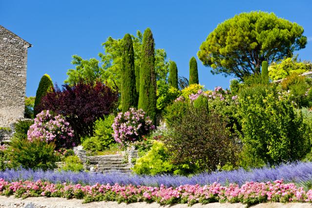 Garden trees in France