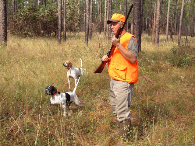 hunter in orange jacket with cap and dogs in pine wood
