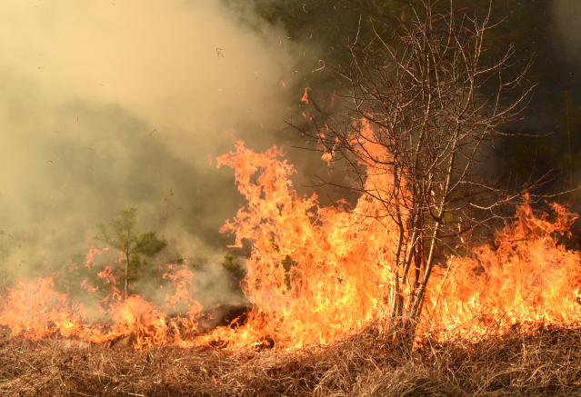 Forest fire burns on dry ground.