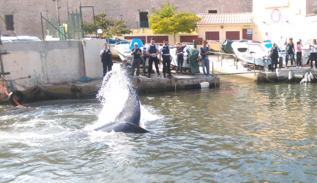 Whale flips tale in harbour as police and onlookers stand on quayside