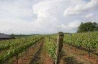 Eco-friendly producer had refused to treat his vines with pesticides