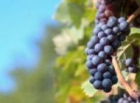 France toasts a vintage year for wine - The Connexion
