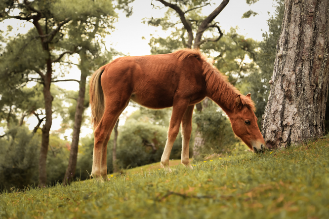 A brown horse eating grass next to a tree. France horse attacks: Horse owners doubt police figures