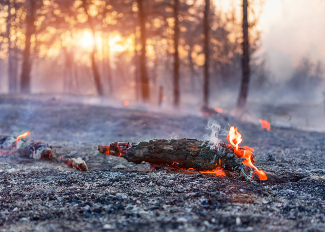 An image of a burning branch on a forest floor
