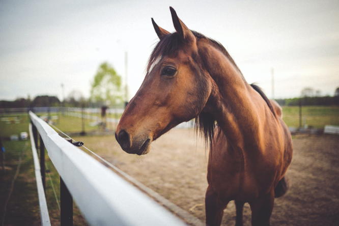 A horse in an enclosure. More horse attacks in France prompt major investigations