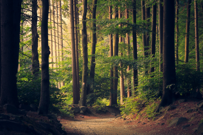 A pathway through a forest. France to plant 50 million trees to repopulate forests to fight climate change