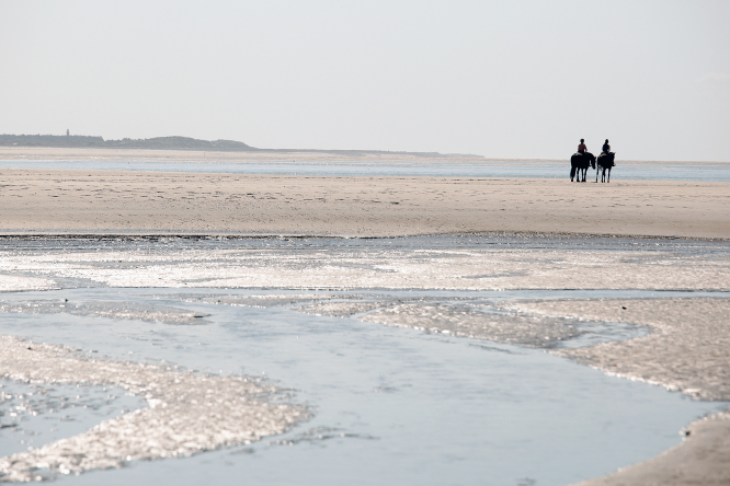A unique French horse breed called the Cheval de Henson roams the Baie de Somme, a new regional park in France.