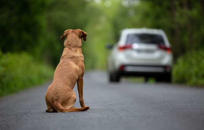 An abandoned dog looking back at a car driving away. France launches €20m action plan against animal abandonment