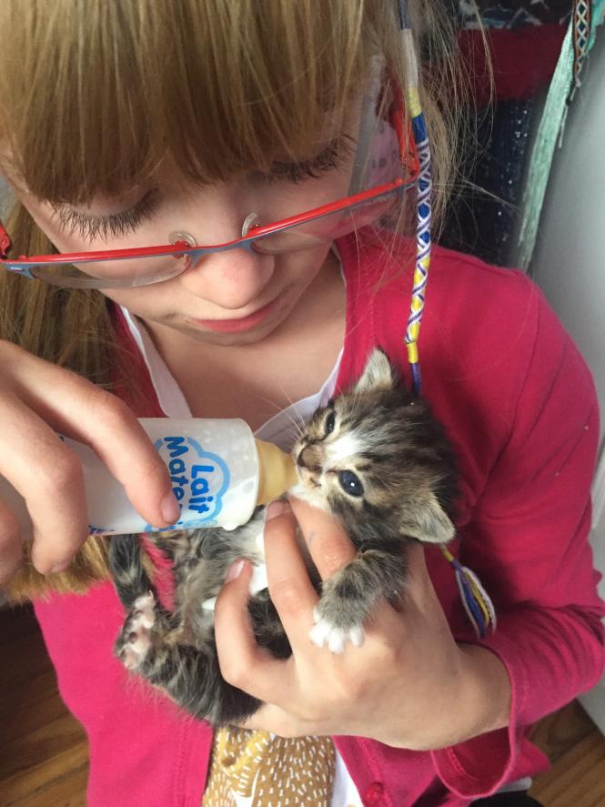 Young girl, Maya, bottle feeds tiny kitten Maggie
