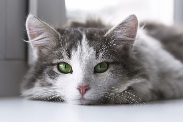A cat's face looking into the camera. 47 French celebrities have signed an open letter to President Macron to help animal shelters.